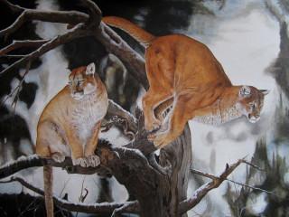 Salto del puma da vecchio albero