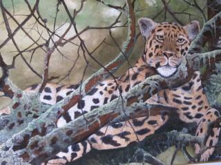 Riposo su ramo dopo la caccia.
