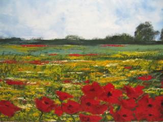 Campo di papaveri e fiori