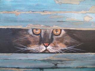 Gatto persiano nascosto dietro fessura di legno.