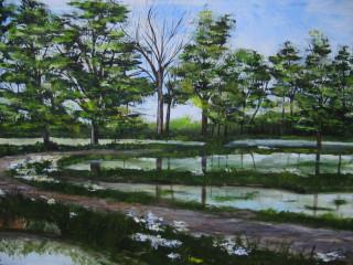 Strada con riflessi di alberi nell'acqua delle risaie