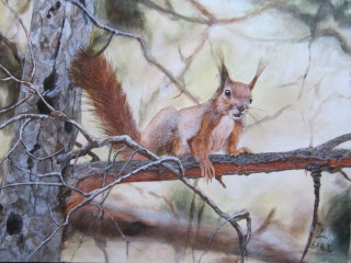 Simpatico scoiattolino,su albero .