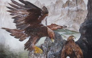 aquile reali con piccolo nel nido,sulle montagne delle Dolomiti.