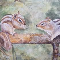 scoiattoli striati