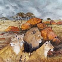 leoni in agguato in attesa di una preda.