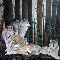 Il bosco .il riposo dei lupi in branco